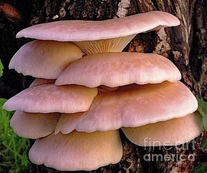 Cindy Treger - Shelf Fungi 1