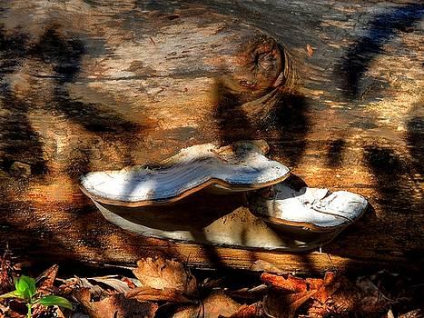 Shelf Fungus on Oak by Phil Penne