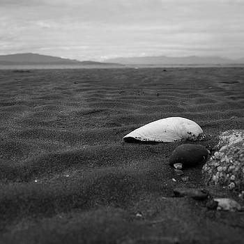 Shell and Sand by Trance Blackman