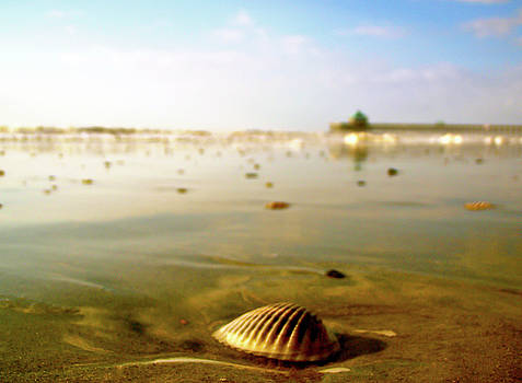 Shell by the Ocean by Justin Ellis