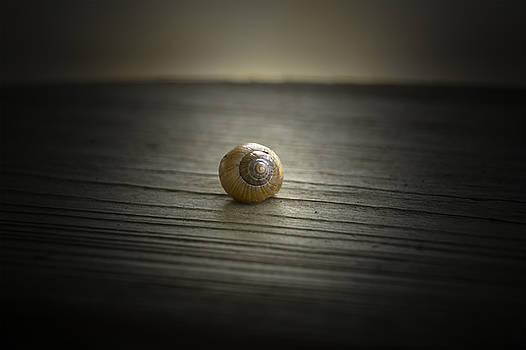 Chris Coffee - Shell