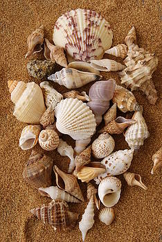 Shell Collection by Diane Reed