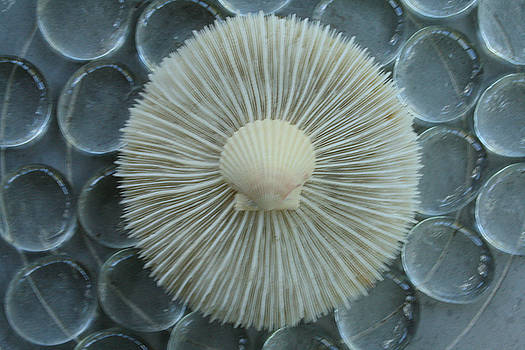 Shell Coral on Glass by Paulette Maffucci