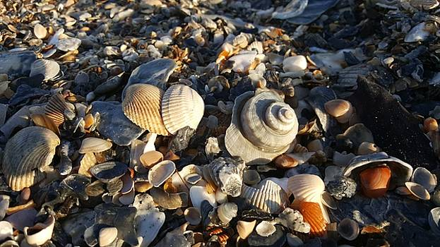 Shell Game by Louis Jones