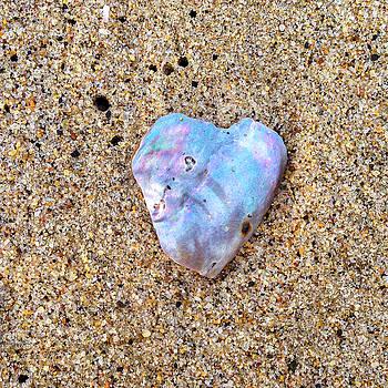 Art Block Collections - Shell Heart