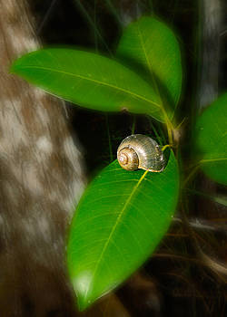 Shell in the green leaf by Jorge Mejias