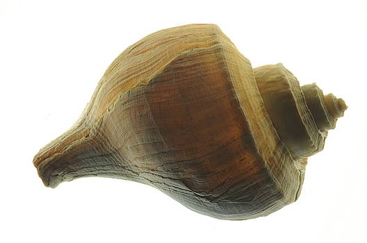 Shell by Jon Benson