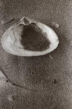 Shell by Linnea Tober
