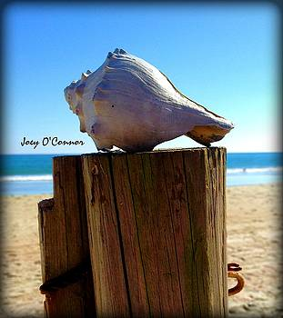 Shell On A Post by Joey OConnor