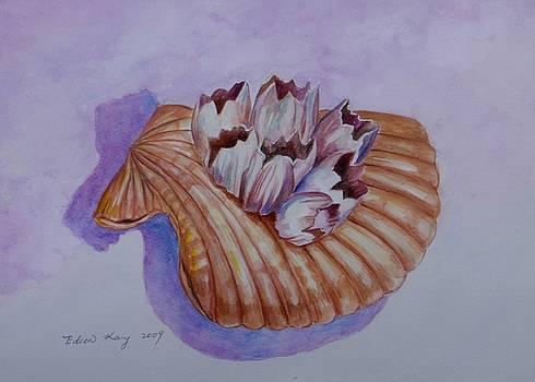 Shell Study II by Edoen Kang