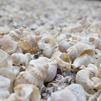 Shells 1 by Jocelyn Friis
