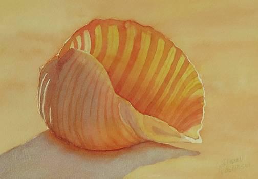 Shells 6 by Judy Mercer