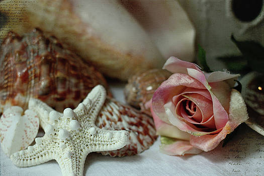 Shells and a Rose by Sherry Hahn