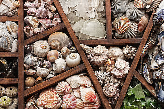 Art Block Collections - Shells and Sea Glass