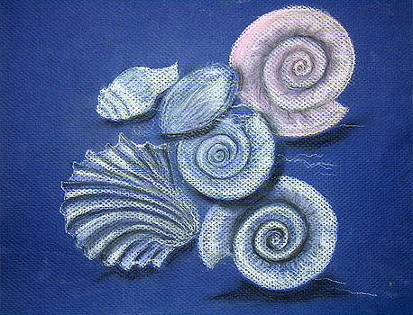 Shells by Barbara Teller
