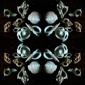 Shells by Chikako Hashimoto Lichnowsky
