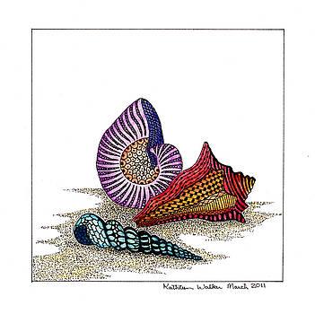 Shells by Kathleen Walker