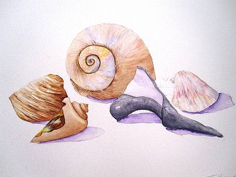 Shells Still Life by Tara Bennett
