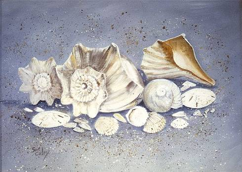 Shells by Sue Coley
