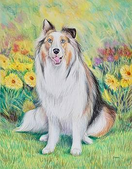 Sheltand Sheepdog in Garden by Gail Dolphin