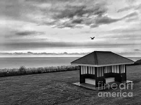 Shelter by John Edwards