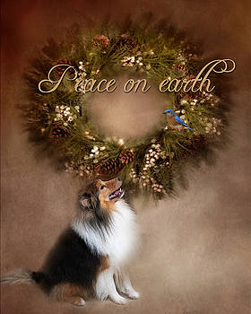 Sheltie Christmas by TnBackroadsPhotos