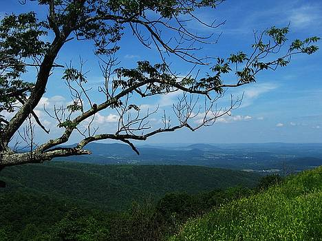 Shenandoah Beauty by Joyce Kimble Smith