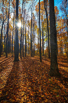 Shenandoah Forest by Ross Henton