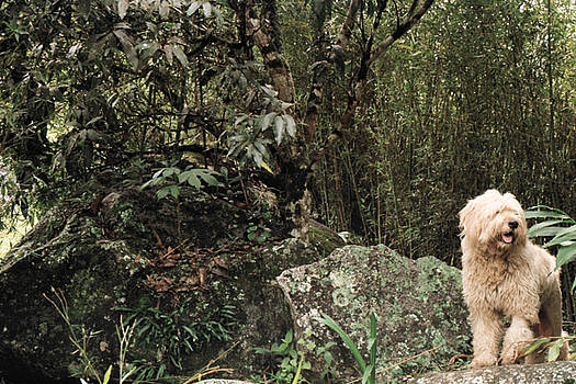 Sheperd in the Woods by David Cardona