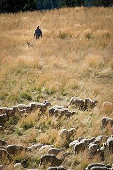 Shepherd Tending Sheep in Colorado by Mary Lee Dereske