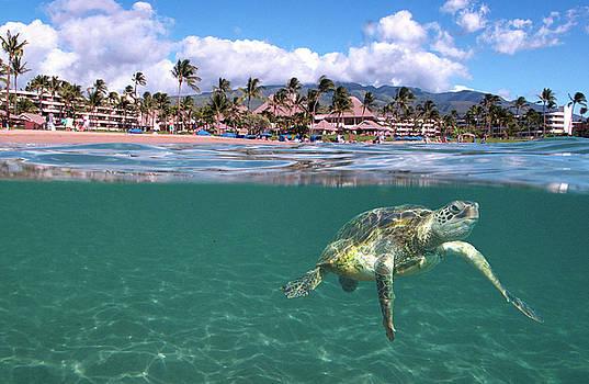 Sheraton Maui by James Roemmling