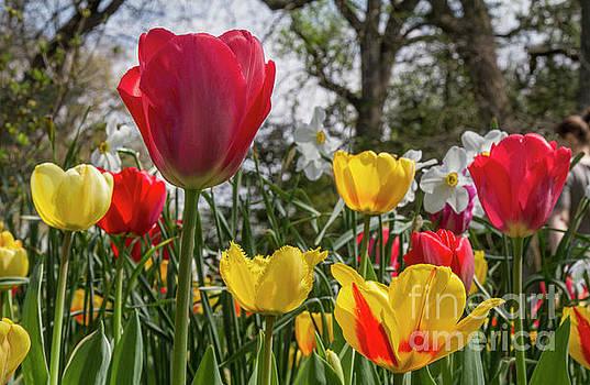 Sherwood Gardens 17 by Chris Scroggins