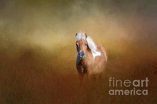 Shetland Pony by Marion Johnson