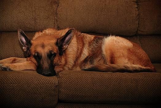 Shhh. Dog Sleeping Here - German Shepherd Dog by Angie Tirado