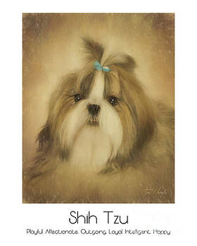 Shih Tzu Poster by Tim Wemple
