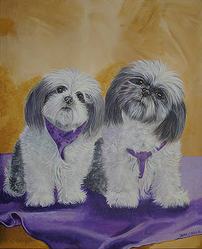 Shih Tzus by Laura Bolle