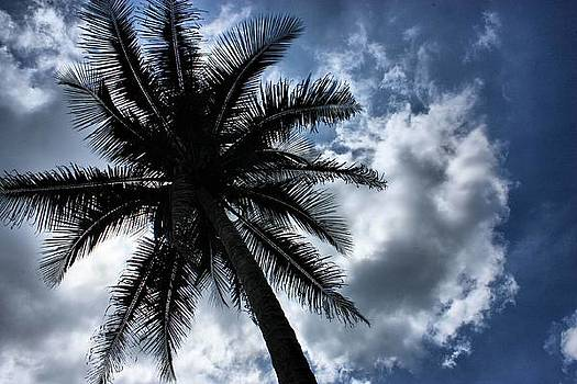 Shillouete Coconut tree by Mario Bennet