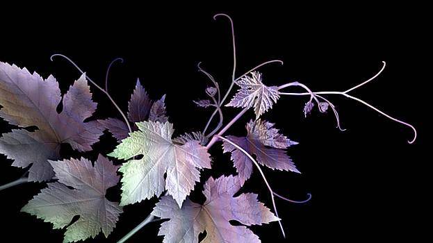 Shimmer Luminosity by Marsha Tudor