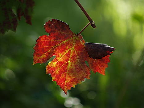 Shimmering Leaf by Carrie Putz