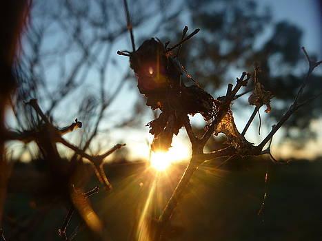 Shine by Meika Quinn
