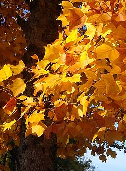 Cathy MONNIER - Shining Fall