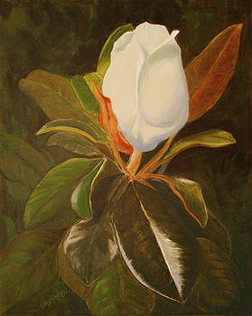 Shining Magnolia by Sandy Murphree Jacobs