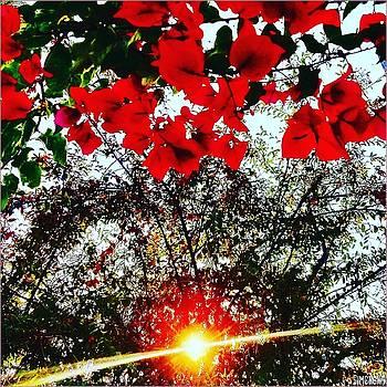 Shining Redding  by Simenona Martinez