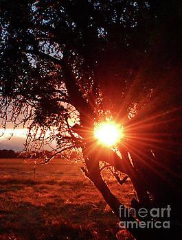 Shining Through by Janie Johnson