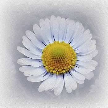 Shining White Daisy by Marinela Feier
