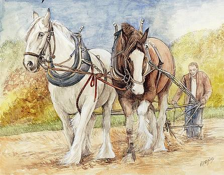 Shire Horses by Morgan Fitzsimons
