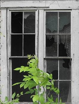 Shirley's Window by Cathy Hacker