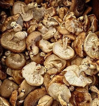 Dee Flouton - Shitake  Mushrooms 2