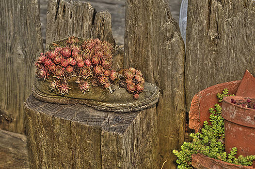 Shoe fence and succulent . by Alexander Rozinov