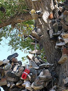 Shoe Tree CloseUp by Edward Hass